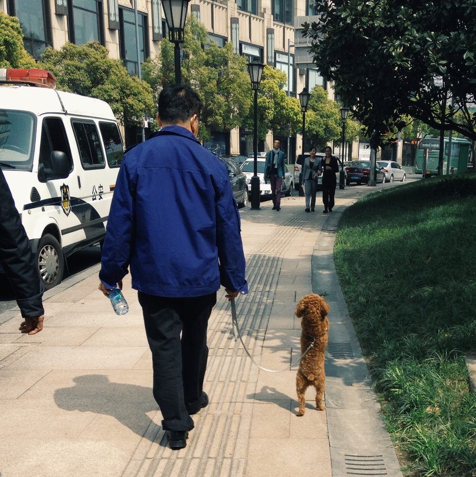 Dog on two legs in Shanghai