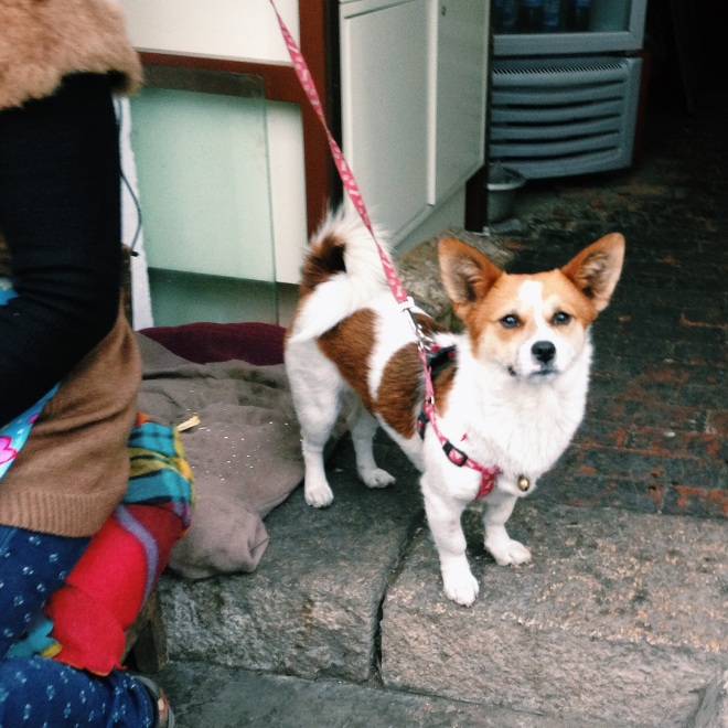 Dog on Pingjiang Street