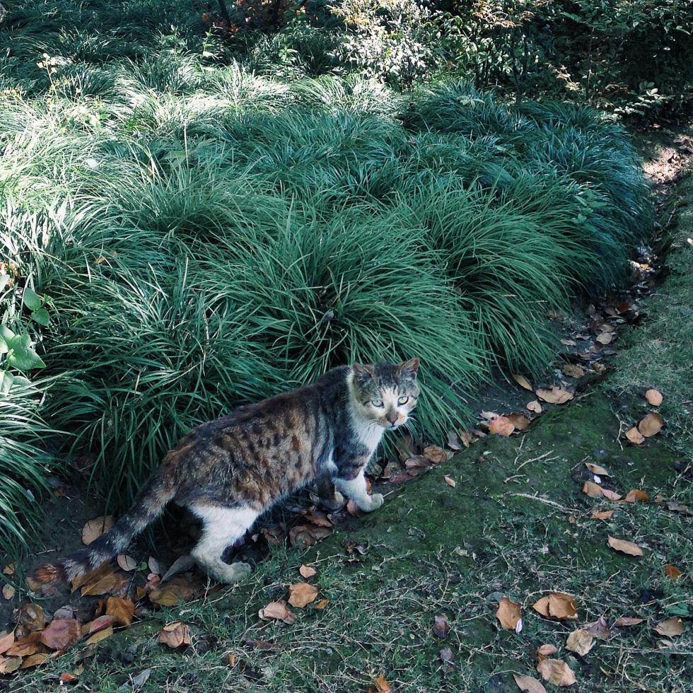 Cat on Fudan campus