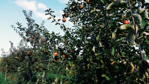 Mack's Apples in Londonderry. NH