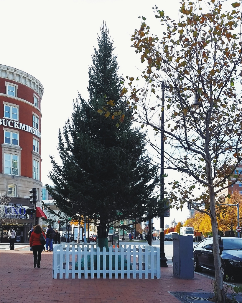 Evergreen Christmas tree in Kenmore Square