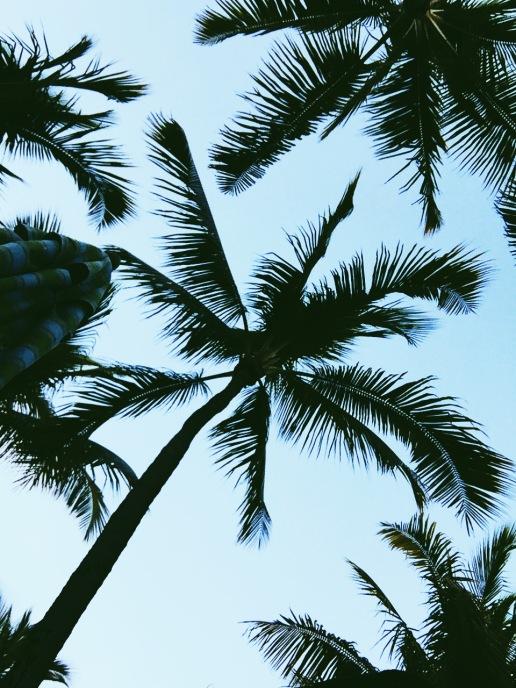 Palm trees at Atlantis Resort & Casino at Paradise Island