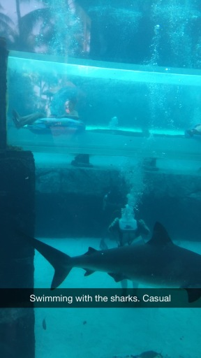 Walking with the Sharks at Atlantis