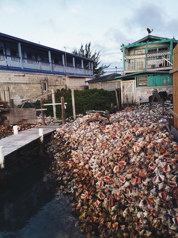 Graveyard of conch shells at Fish Fry.