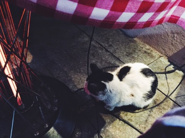 Cat huddles next to the radiator under the table at Café Nar in Istanbul