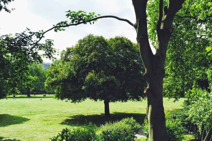 Huge trees at Kennington Park