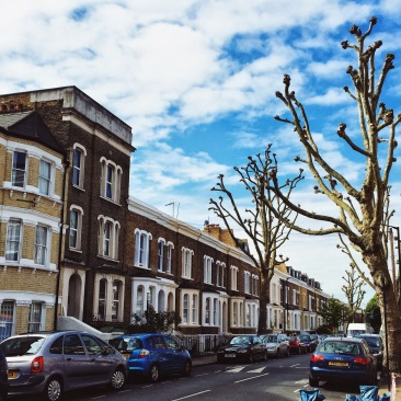 Interesting trees in Kennington, London