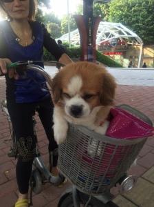 So many cute dogs in Guangzhou
