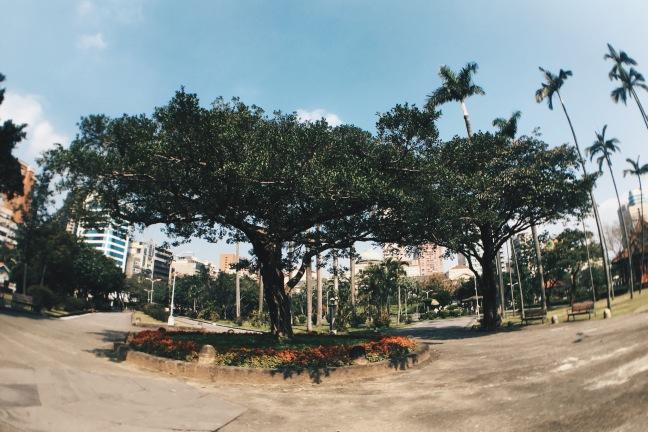 Interesting tree at 228 Peace Memorial Park Taipei