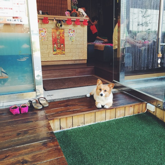 Corgis outside Japanese massage shop in Taipei
