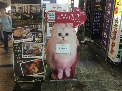 Cat café in Busan